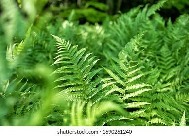 close up of green ferns in a botanical garden