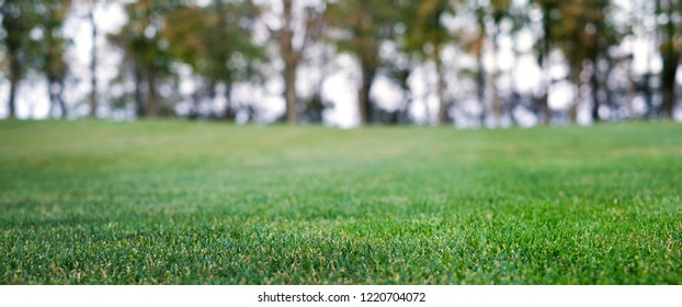 Close up green graass field with trees on background