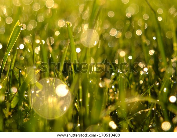 Close up of green grass with