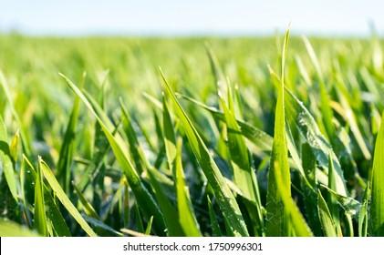 Nahaufnahme von grünem Gras mit blauem Himmel auf dem Hintergrund