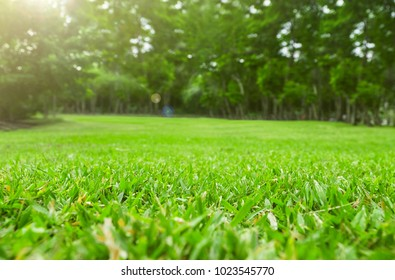 Close up green grass field with blur park background
