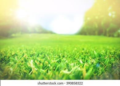 Close up green grass field with blur park background,Spring and summer concept,vintage filter