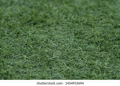 Close up green grass soccer field background.