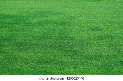 Close up green grass soccer texture background with shadow of large tree.