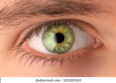 Close up of green human eye with white reflection
