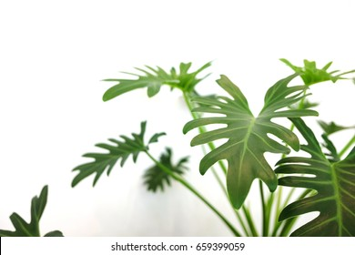 Close up of green indoor plant on white wall. Minimal style interior decoration.
