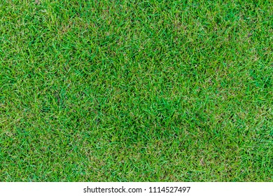 Close up green lawns are beginning to recover from detriment of being trample.