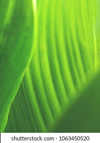 Close up of green leaf - Abstract view