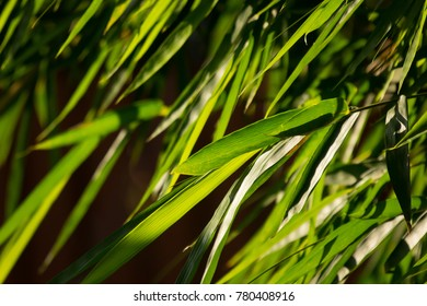 Close up green leaf of bamboo tree