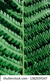 close up green leaf of fern