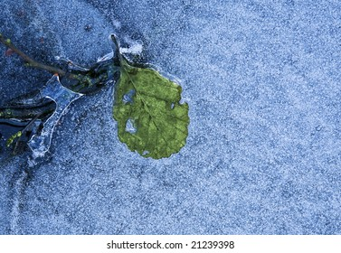 Close up of green leaf in ice with air bubbles as winter background. Space for text.