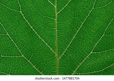 Close up green leaf,  Important nature In the environment around us