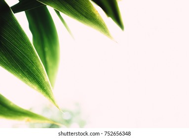 close up green leaf natural in nature,   growing of foliage fresh plant spring time,  bright color picture for wallpaper or background environment with white copy space