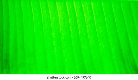 Close up green leaf on background