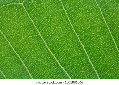 Close up green leaf texture background