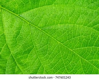 Close up green leaf wallpaper.