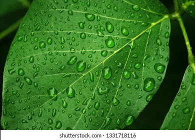 close up of green leaf with water droplet
