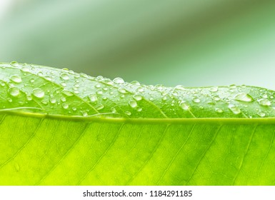 Close up Green leaf with water drops