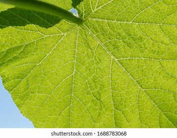 Close up of green leave with structure - biodiversity