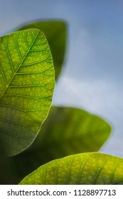 Close up of green leaves in Summer