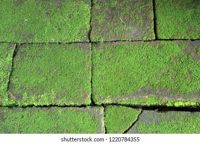 Close up green mos on old brick footpath, Natural Background.
