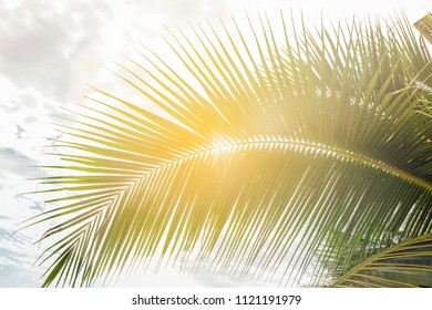 Close up green palm leaf at the morning sun