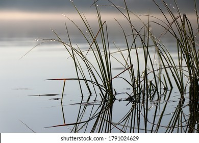close up of green reeds in lake with sunny reflection on water with mountains in background