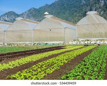 Close up green salad vegetables farming