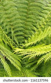 Close up of green succulent fern leaves in a round