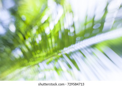 Close up of a green  tropical palm tree frond.