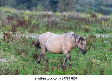 Close up of a grey horse living in the wild.