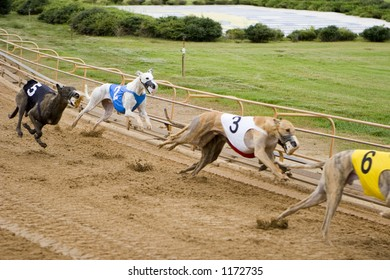 Close up - greyhounds racing on the track