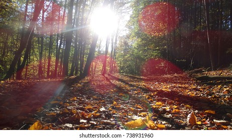 A close to the ground shot of fallen leaves on the woods floor in upstate New York.