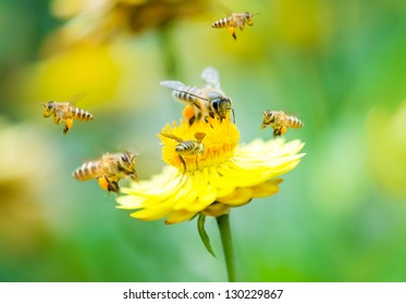 Close up group of bees on a daisy flower