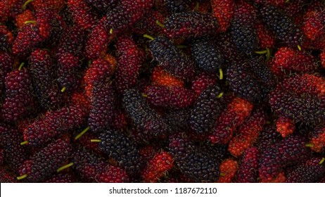 Close up for group of organic mulberry,    Black ripe and Red unripe mulberries, Mulberry fruit isolated