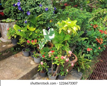 Close up group of potted flowers arrangement in garden in Thailand