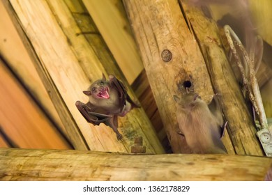 Close up group of small bat, hanging upside down
