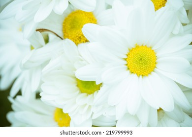 Close up group of white flower