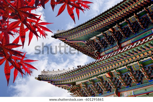 Close up Gyeongbokgung Korean Castle palace with maple leaves in Seoul, South Korea(Traditional Roof Korea ),Symbol of korea