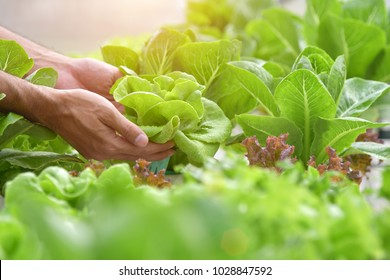 Close up hand farmer in hydroponic garden during morning time food background concept with copy space
