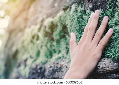 Close up hand of girl touching mos on stone in forest