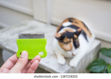 Close up hand holding comb of pet brush with cat fur clump or tuft wool after grooming with cat lying down blurred background