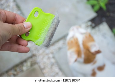 Close up hand holding comb of pet brush with cat fur clump or tuft wool after grooming with cat blurred background