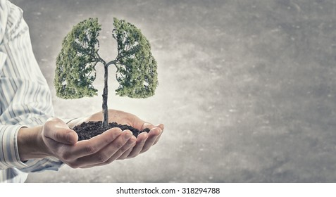 Close up of hand holding green tree concept