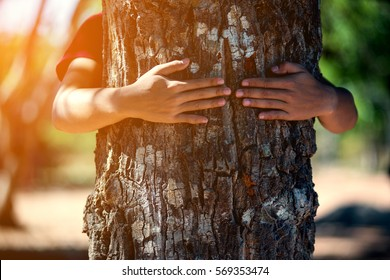 close up hand man hug tree
