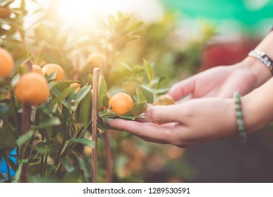 Close up Hand Oranges growers with maintain - image