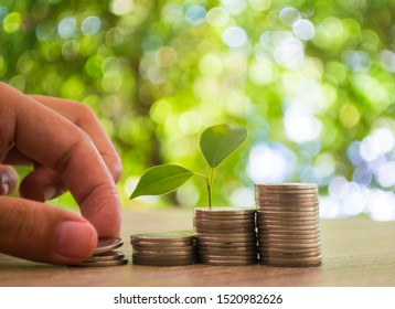 Close up hand putting the coin and the tree growing on the coins with soft focus background