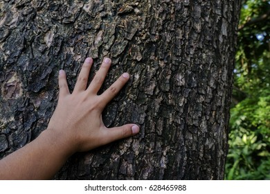 Close up hand touch on big tree, concept We must fight against deforestation