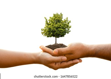 Close up hand of two people holding tree in soil isolated on white background. Planting the tree, Save world, or growing and environment concept