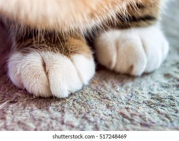 close up of hands cat